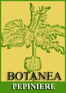 botanea+ pepiniere+repair+agriculture+responsable+nouvelle+caledonie+AR+certification+label+certification+produits+locaux+environnement