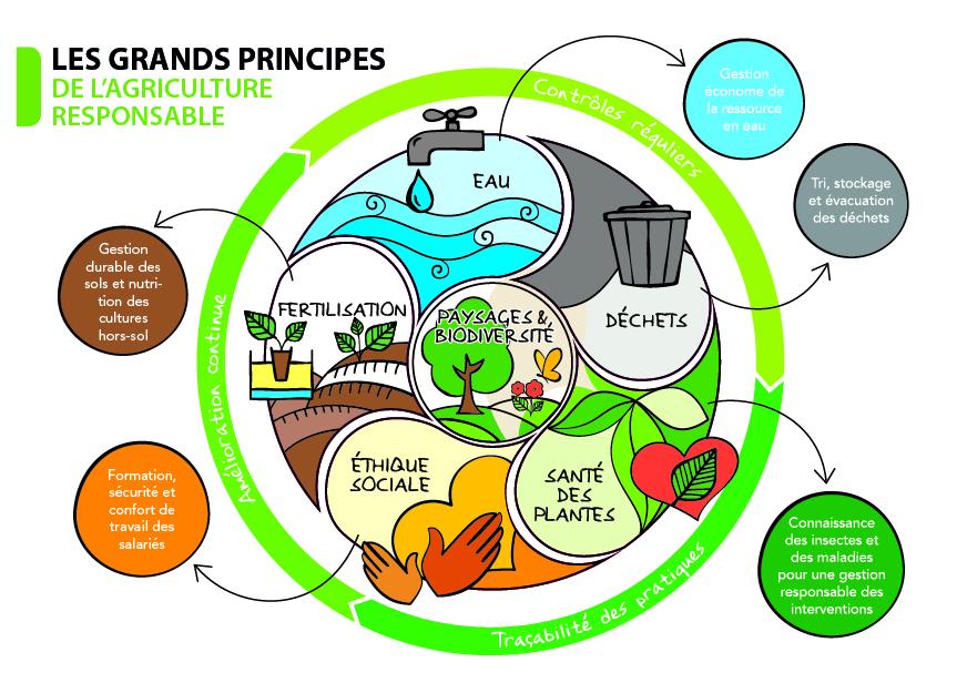 Grands + principes + AR + schéma