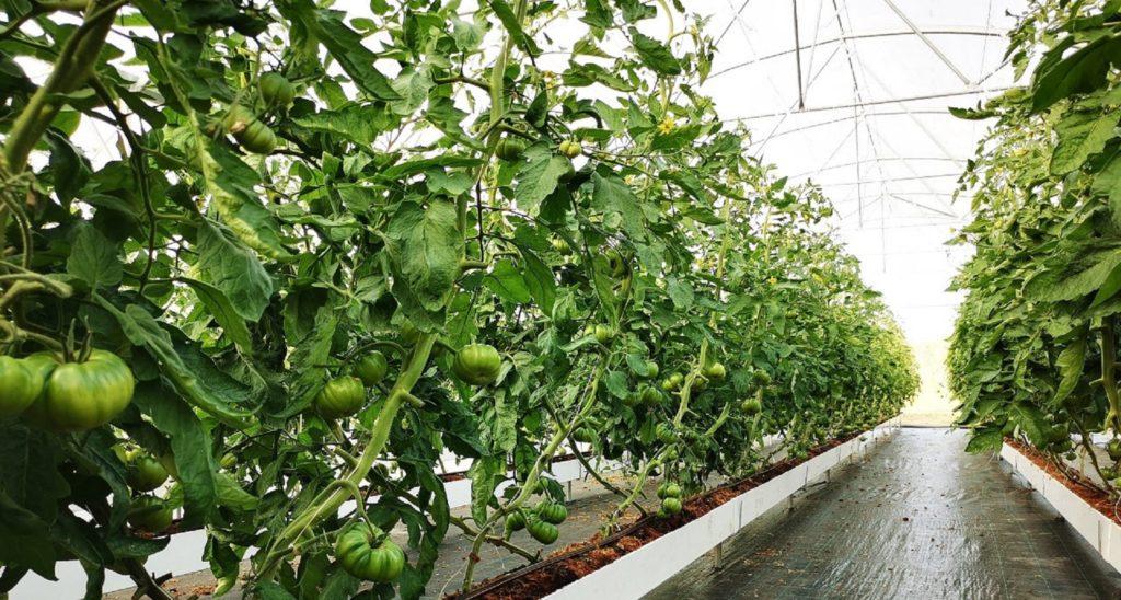 drainage+ eau+repair+agriculture+responsable+nouvelle+caledonie+AR+certification+label+certification+produits+locaux+environnement